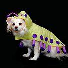 Cutiepillar 2 by Heather Crough