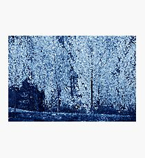 Blue #4 Photographic Print
