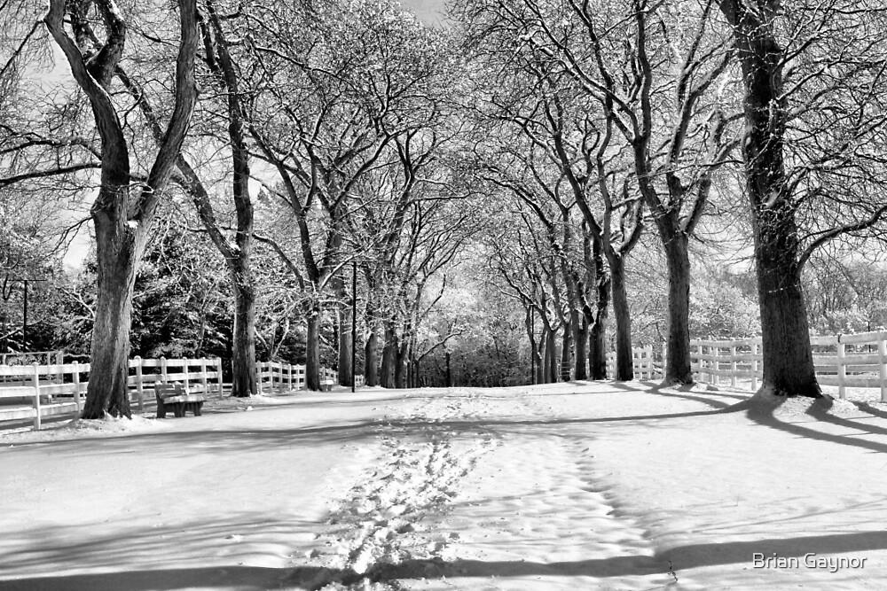 Winter Grandeur by Brian Gaynor