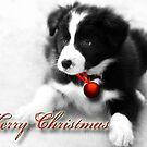 Merry Christmas by Kym Howard