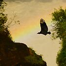black vulture and rainbow by jon  daly