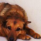 Hayley Dog by LouJay