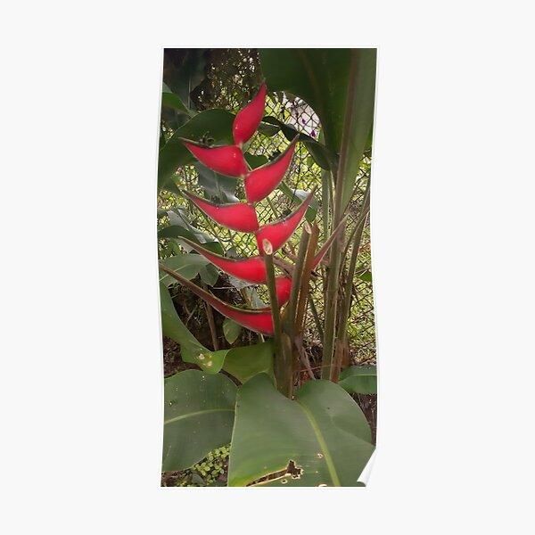 Tropical Flover from Tropical Garden Poster