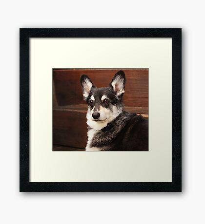 Handsome ~ Framed Print