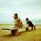 Collies on Surf by BellatrixBlack
