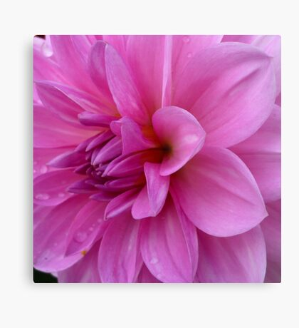 Petals (available in ipad cases) Metal Print