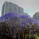 Springtime in Sydney by Eve Parry