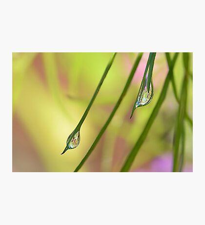 More Dew Drops Photographic Print