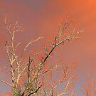 Firesticks by Alex Call