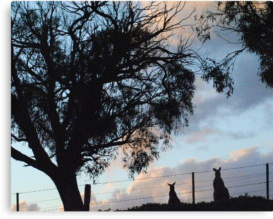 Kangaroos in Silouette, under the Gum tree - Whittlesea, Victoria by Heather Samsa