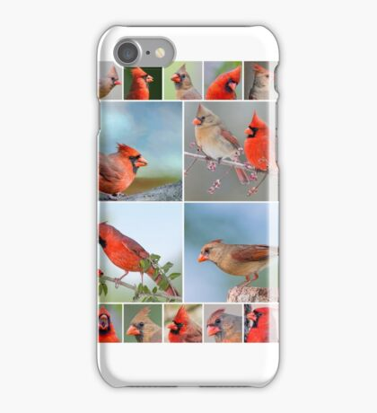 Northern Cardinals Galore iPhone Case/Skin