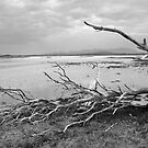 Driftwood at Logans Lagoon by Andrew  Makowiecki
