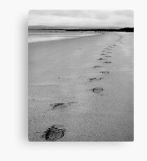 Where Did You Come From Canvas Print