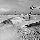 Driftwood at Logans Lagoon 2 by Andrew  Makowiecki