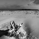 Driftwood at Logan's Lagoon 3 by Andrew  Makowiecki