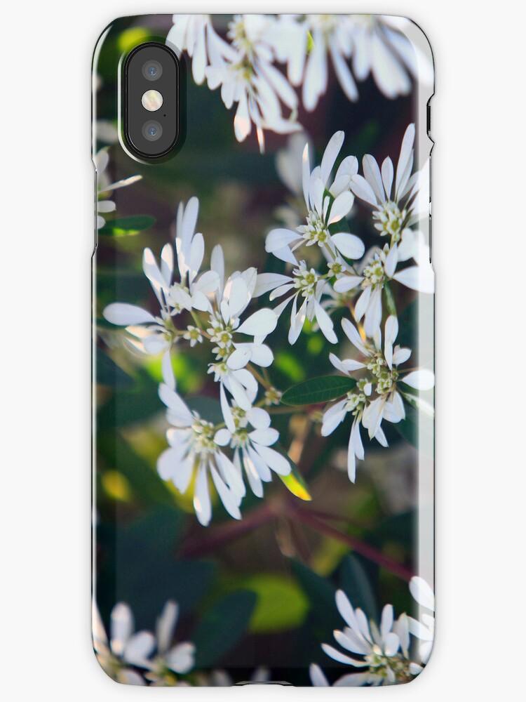 White flowers by James mcinnes