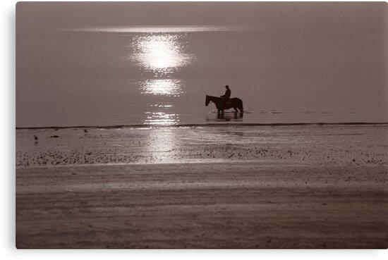 Horse at sunrise by Flo Smith