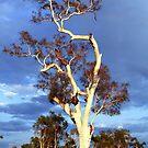 Sun Seeker by James mcinnes