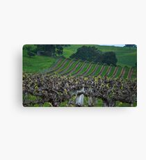 Barossa Vineyard Canvas Print
