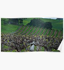 Barossa Vineyard Poster