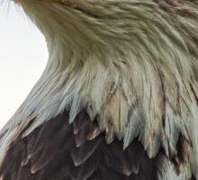 American Bald Eagle Portrait Sticker