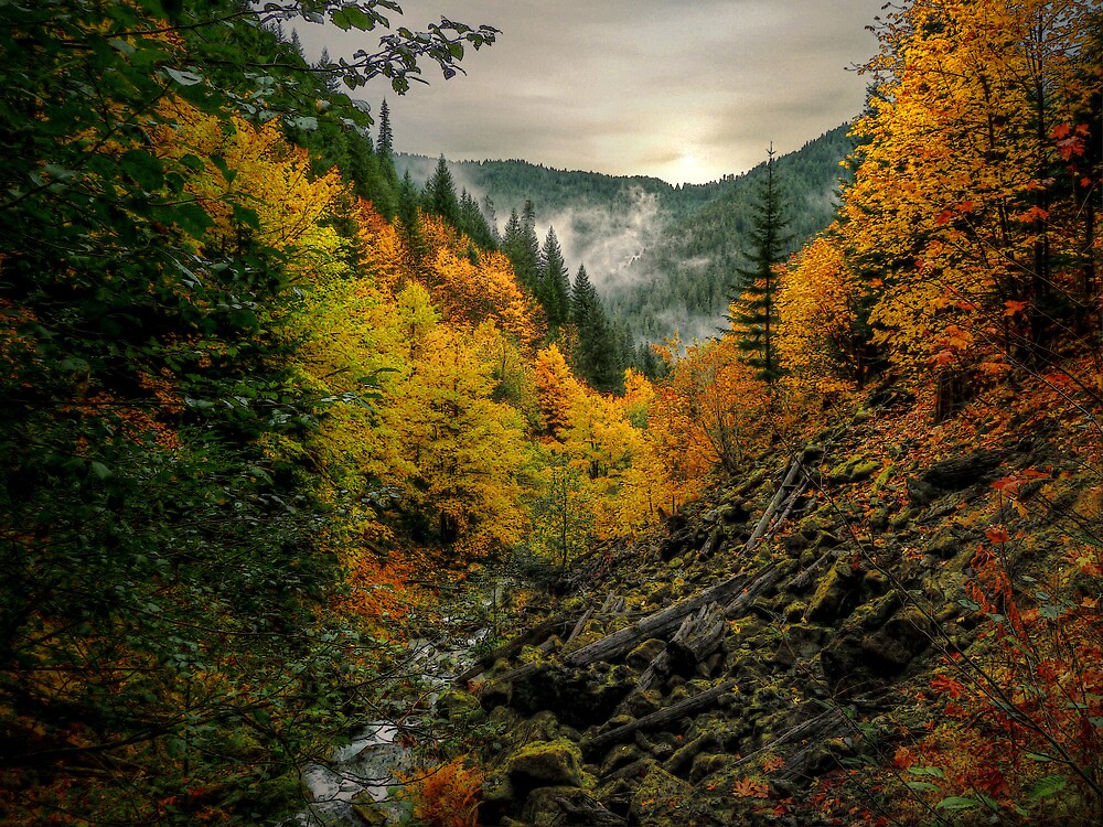 There Is Gold In The Hills by Charles & Patricia   Harkins ~ Picture Oregon