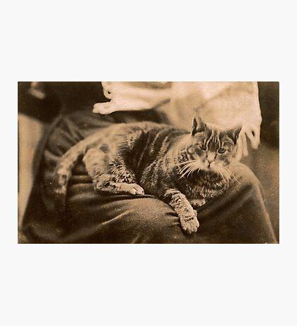 Retro Cat Photographic Print