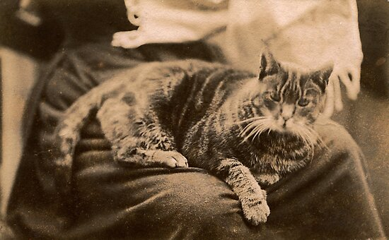 Retro Cat by Flo Smith