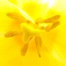 Yellow Tulip In Macro by tmac