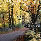 Autumn Path by Paul Gibbons