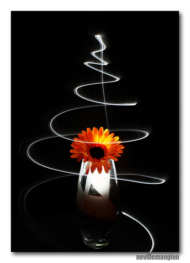 The Light Twirl of a Flower by NevilleMangion