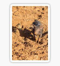 Piglet in the mud Sticker