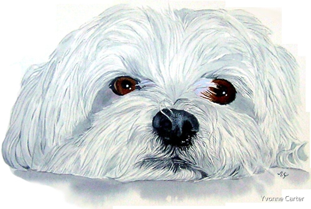 Bogart the Maltese by Yvonne Carter