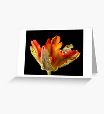 Red eyed tree frog on parrot tulip Greeting Card