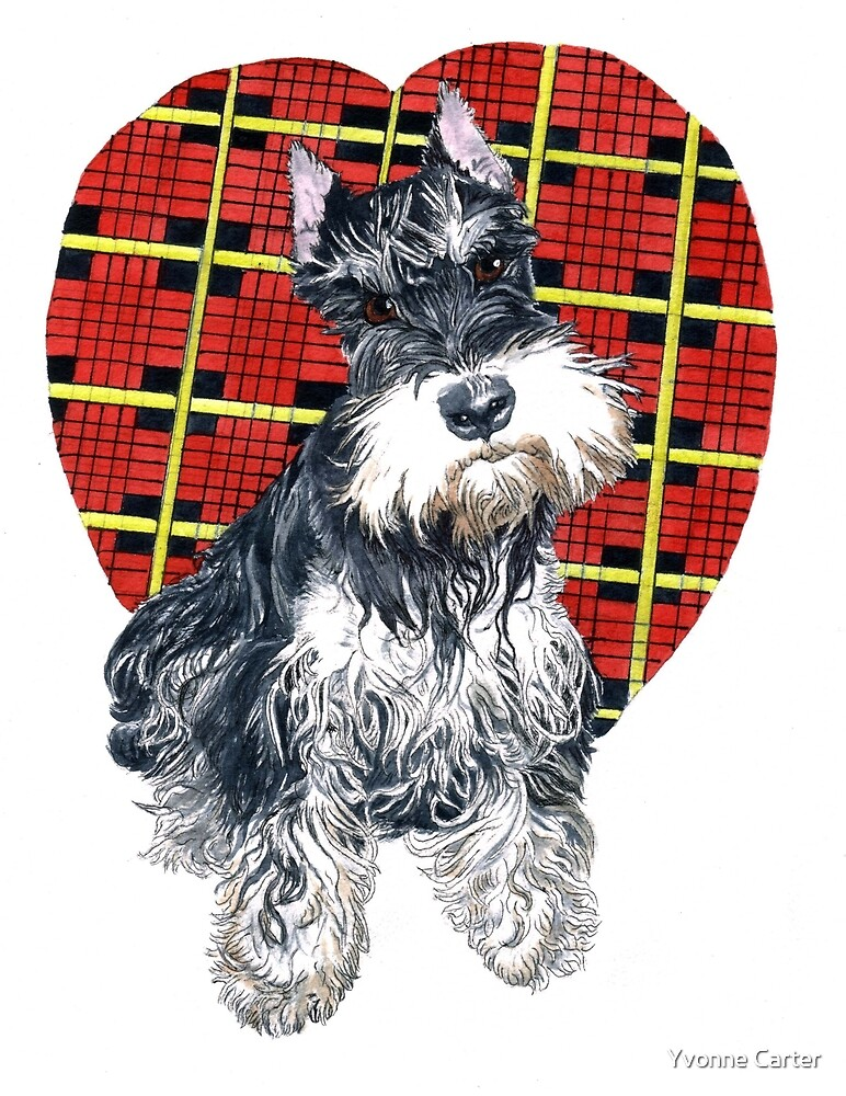 Sybil the Schnauzer by Yvonne Carter