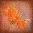 Peach Dream by Trudy Wilkerson