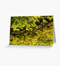 Autumn Reflections in Silver Creek  Greeting Card