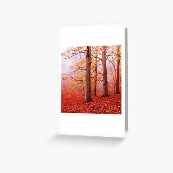 Burnham Beeches. November Greeting Card