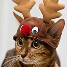 Christmas Cat by JPAube