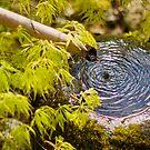 Zen ripples ~ Japanese Garden, Mawgan Porth by Zoe Power