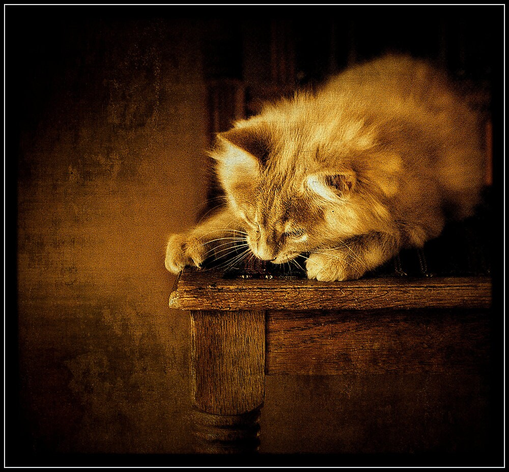 Sittin' kitten by Alan Mattison