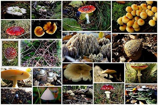 Mushrooms  by hanslittel