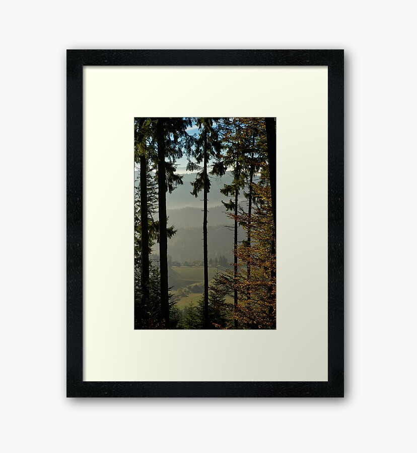 Photo prints : Forest on the slopes of Climont