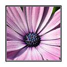 Pink summerflower by marina63