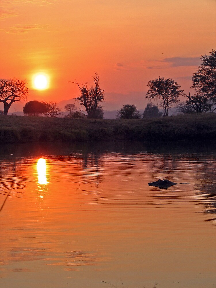Hippo pool at sunset by Rebecca Mason