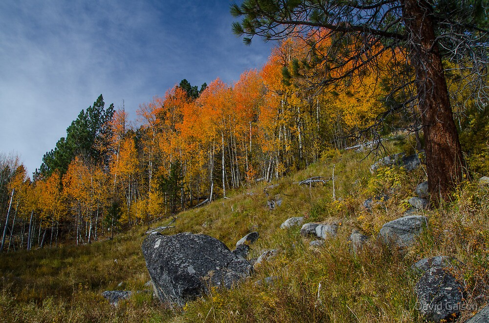 Hope Valley Fall Colors - 5 by David Galson