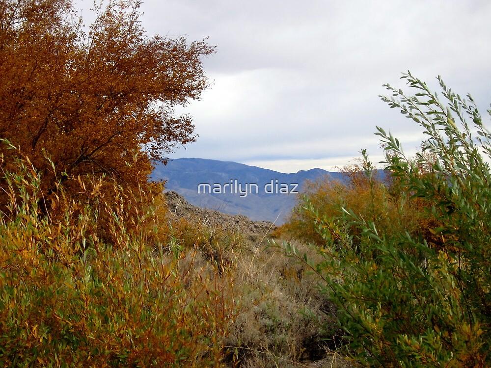 Desert Dreams In The Sierras by marilyn diaz