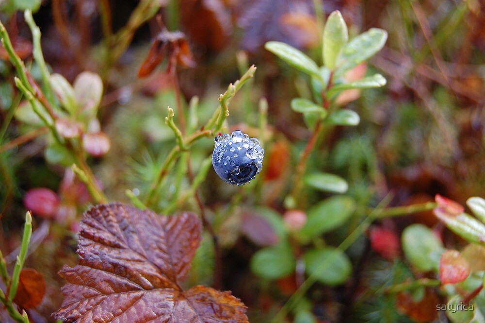 The last blueberry by satyrica