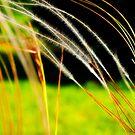 Lovely grass by marina63