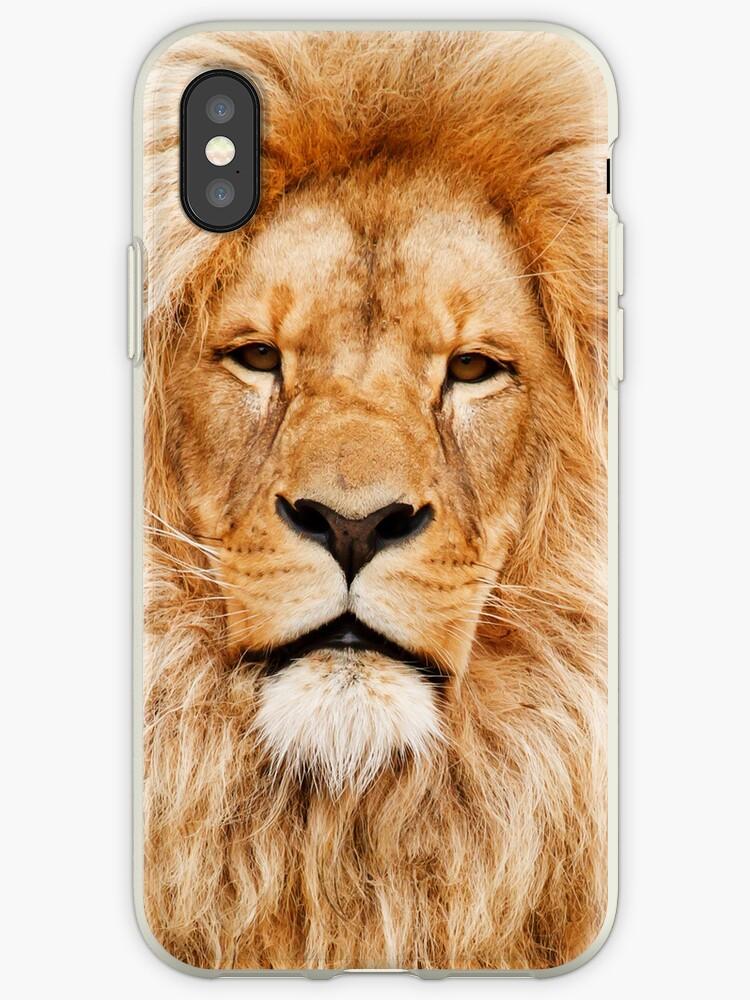 Lion by pjwuebker